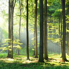 Naklejka Na szybę Morning in the forest