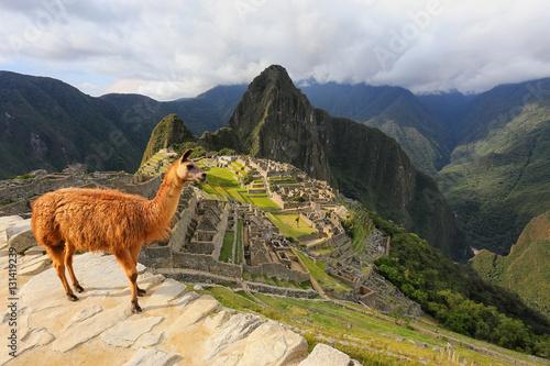Staande foto Lama Llama standing at Machu Picchu overlook in Peru