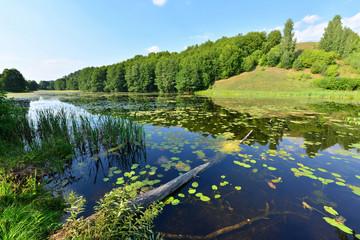 widok na brzeg jeziora w Mazurach, Polska