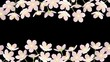 Blooming Cherry blossoms frame - line, Alpha channel