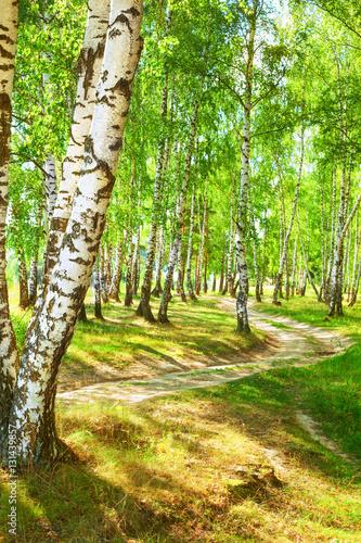 Plakat lato w słonecznym brzozowym lesie