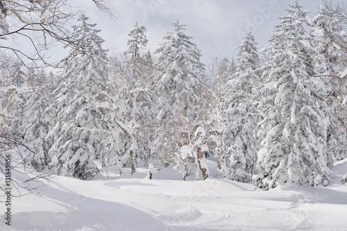 Fotobehang 冬の大雪山・旭岳 天女ヶ原湿原登山道