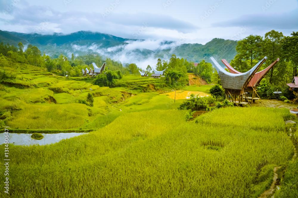 Fototapety, obrazy: Morning fog in Toraja