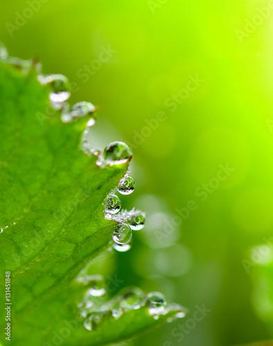 rosa-na-trawie-w-wiosnie-po-deszczu