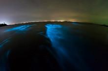 Bioluminescent Plankton. Glowi...