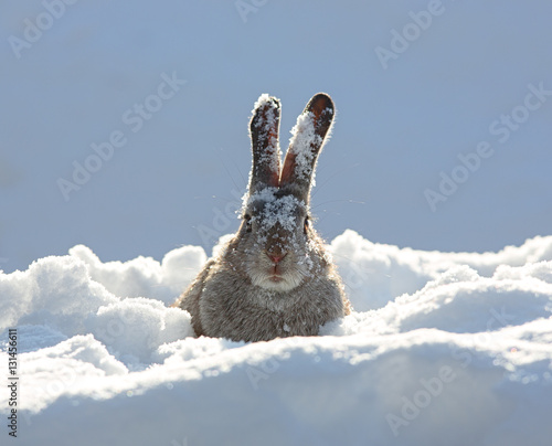 bunny ears in snow