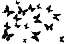 Black Butterfly On A White Bac...