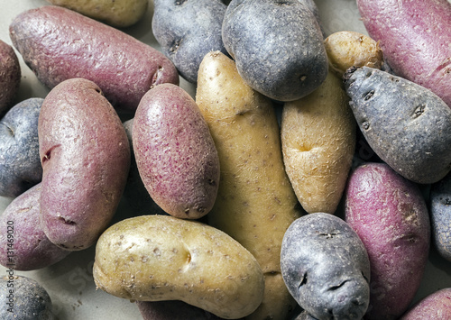 Fotografie, Obraz  Purple,red and brown potatoes