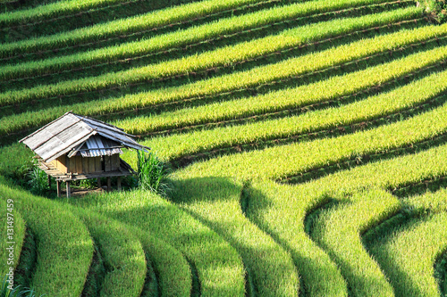 Tuinposter Rijstvelden Rice fields on terraced in rainny season at Mu Cang Chai, Yen Bai, Vietnam. Rice fields prepare for transplant at Northwest Vietnam