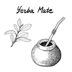 Yerba mate tea branch and c...