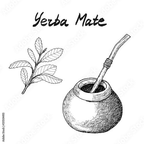 Yerba mate tea branch and c...