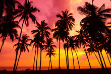 Palm Trees Silhouettes On Trop...
