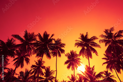 Canvas Prints Palm tree Palm trees silhouettes on tropical beach at summer warm vivid sunset time with clear sky and sun circle with rays