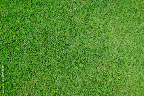 Deurstickers Gras green grass background