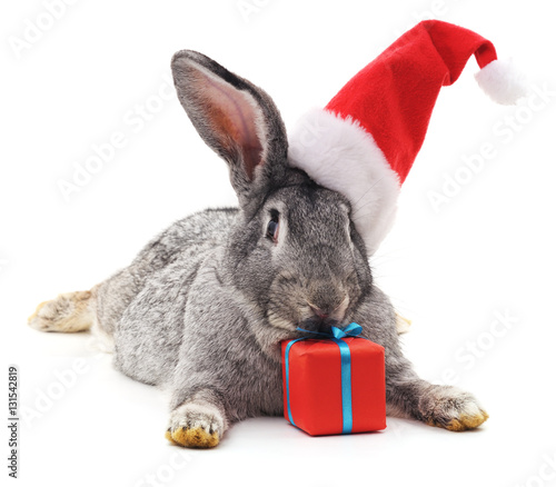 Rabbit in a Christmas hat.