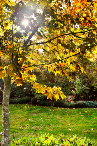 Fotografie, Obraz  Fall afternoon sunlight through the orange & yellow leaves
