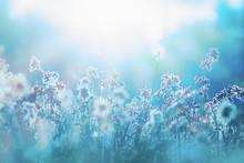 Autumn Grass And Wildflower Ba...