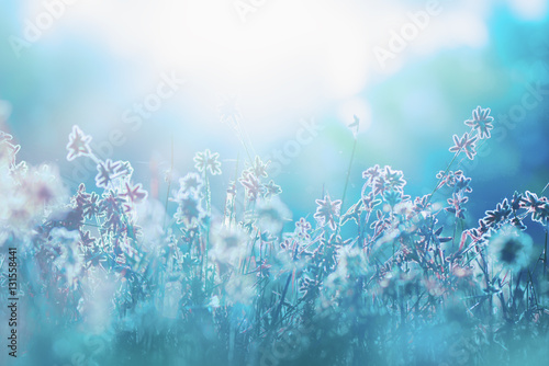 Fotobehang Natuur Autumn grass and wildflower background