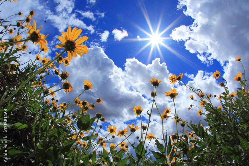 Fototapety, obrazy: Sunny Day