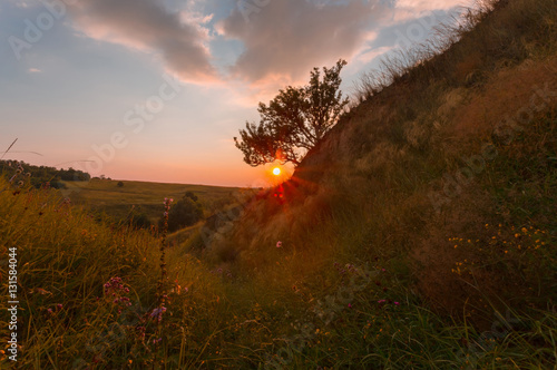 Poster Chocoladebruin Beautiful summer sunset landscape. Meadow flowers on foreground and dramatic painted sky over.