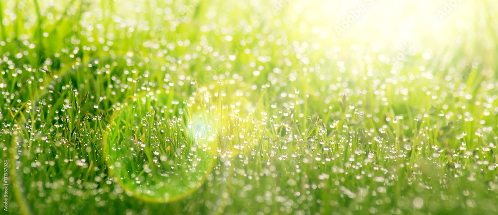 Fototapety, obrazy: Background of dew drops on bright green grass