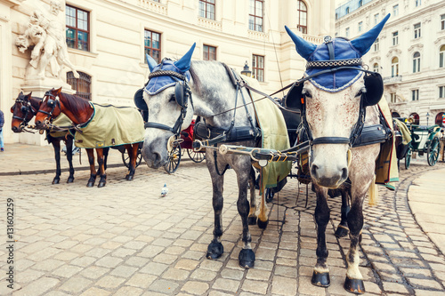 Fotografie, Obraz  Horse-driven carriage at Hofburg palace in Vienna, Austria