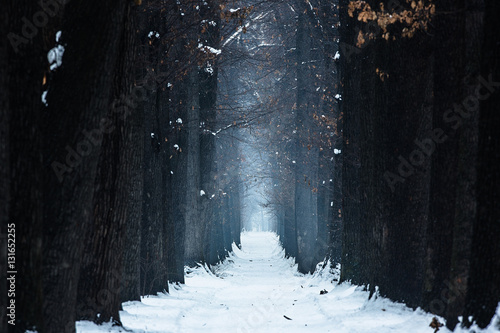 Canvas Print mystical oak alley winter