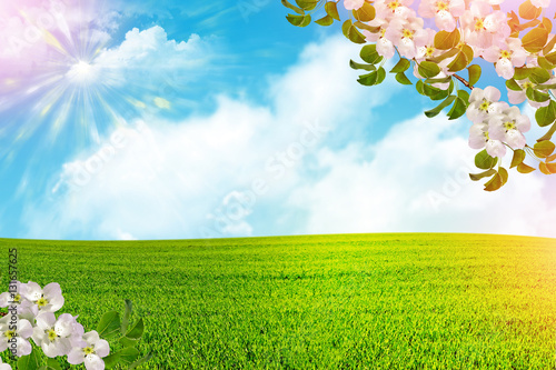 Obraz na plátne Blossoming branch apple. Bright colorful spring flowers