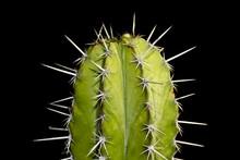 Close Up Of Cactus On Black Background