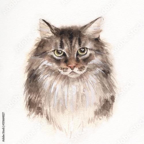 powazny-kot