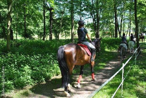 Papiers peints Equitation Jeździectwo