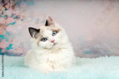 Valokuva Cute ragdoll kitten in flowery background