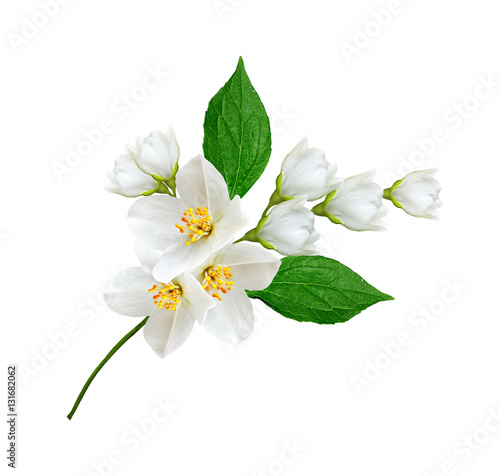 branch of jasmine flowers isolated on white background Wallpaper Mural
