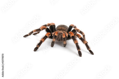 Foto Isolated image of a tarantula
