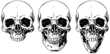 White Graphic Human Skull With...