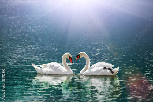 In de dag Zwaan beautiful white swan in heart shape on lake in flare light .Love bird and Valentine's day concept