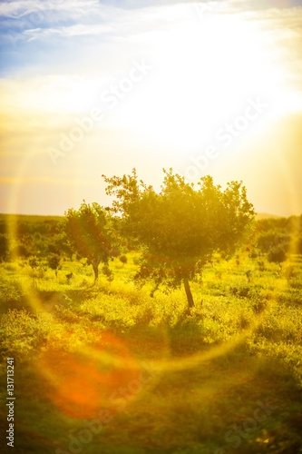 Photo  Arbres et flare