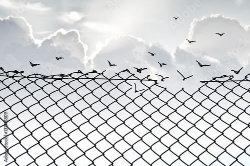Photo  Grillage et liberté