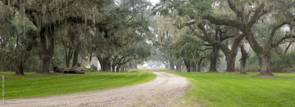 Fototapety, obrazy: Southern plantation in the fog