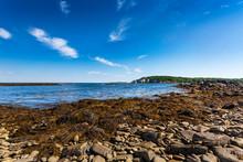 Rocky, Seaweed Covered Beach At Ryefield Cove On Peaks Island, Casco Bay, Maine