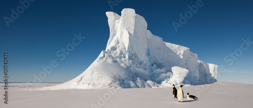 Canvas Print Emperor penguins in front of massive iceberg