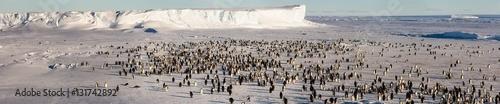 Foto auf Gartenposter Antarktika Emperor penguin colony in Antarctica