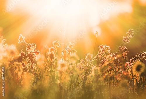 Plakat Jesieni trawa i wildflower tło