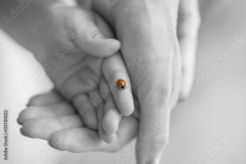 Ladybug on a childs finger