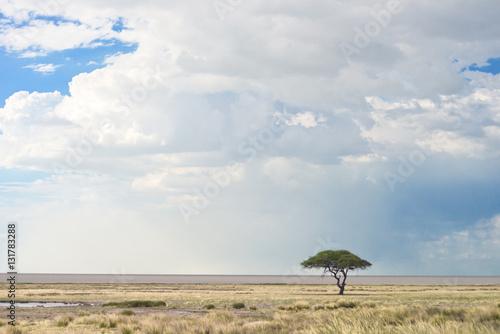 Spoed Foto op Canvas Beige african landscape