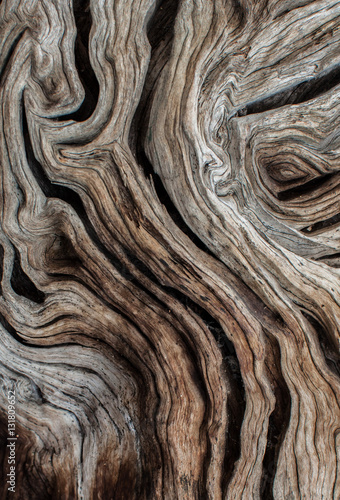 Photo sur Aluminium Oliviers Textura de olivo