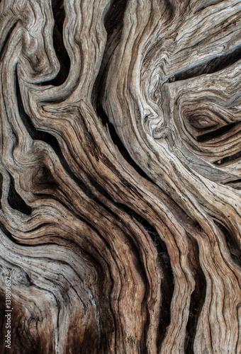 Cadres-photo bureau Oliviers Textura de olivo