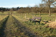 lonley bench in a field