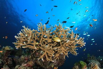 Fototapeta na wymiar Coral reef and fish in ocean. Similan Islands, Thailand