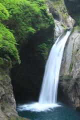 Fototapeta Wodospad 大釜の滝 徳島県